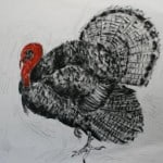 Turkey by Michael Flaherty
