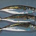 Mackerel, Grey by Michael Flaherty: Irish art at The Greenlane Gallery