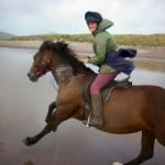Rosie on Ventry beach by Dingle Horse Riding