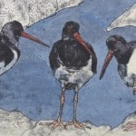 Oyster Catchers – Limited Edition Print by Annabel Langrish