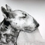 Bull Terrier V by Heidi Wickham