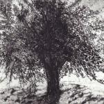 'Crann Draíochta', Etching, Ed. of 22, 15 x 20 cm