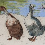 Quackers – Limited Edition Print by Annabel Langrish