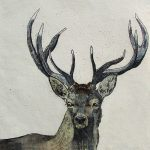 Stag by Annabel Langrish