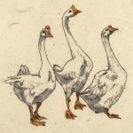 Three Geese by Annabel Langrish