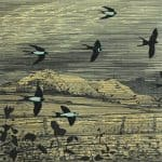Swallows by Niall Naessens