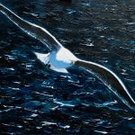 The Movement of Slow Water by Michael Flaherty: Irish art at The Greenlane Gallery